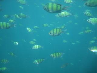 ピピ島の魚