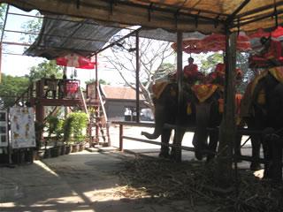 アユタヤの象乗り場